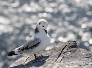 bird in Northumberland
