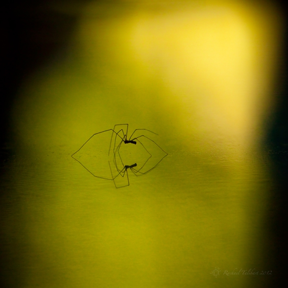 spider and reflection
