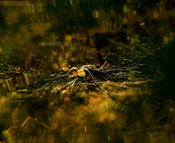 spider and web in evening light
