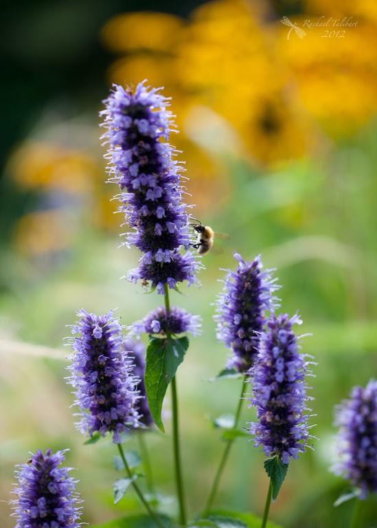 Garden colour and bee