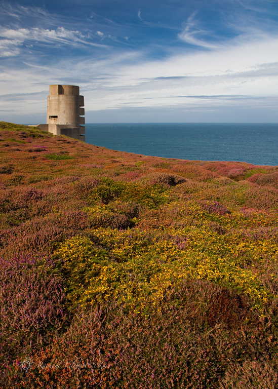 Tower among heather on cliff, Jersey