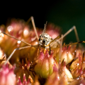 insect on sedum