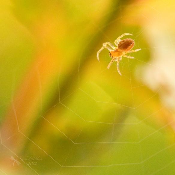 macro spider on web