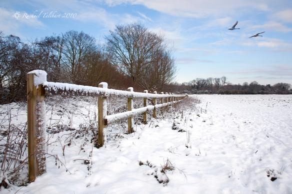 Surrey snowscape