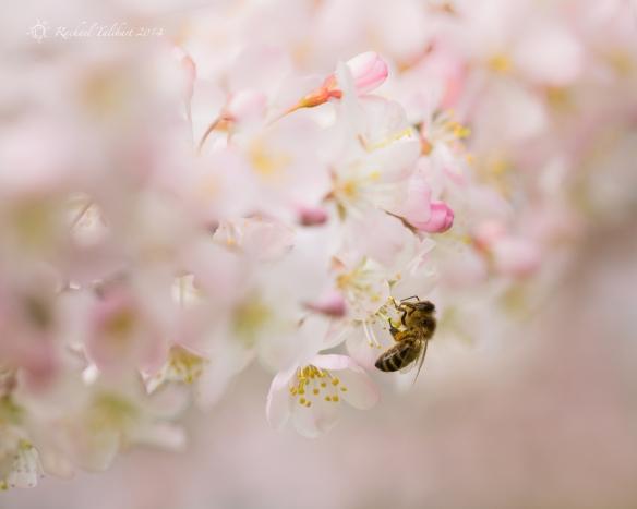 Spring macro