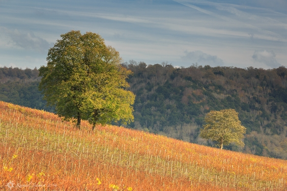 Denbies Autumn 2