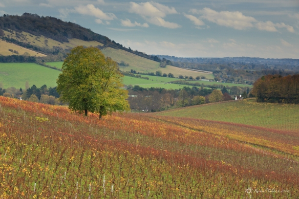 Denbies Autumn 3