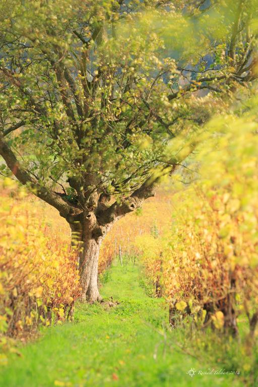 Denbies Autumn 4