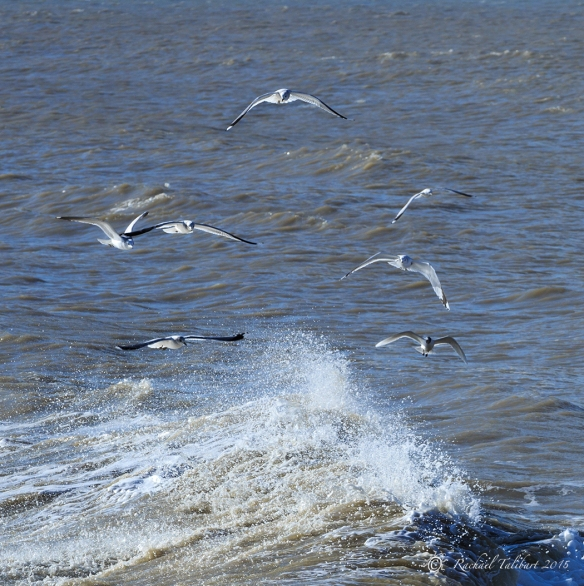 gulls and sea