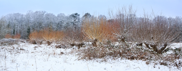 willows and snow